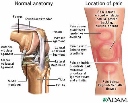 Anatomy of pain